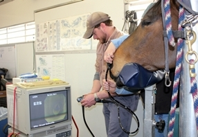 Equine Endoscope